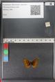 http://mczbase.mcz.harvard.edu/specimen_images/ent-lepidoptera/images/2011_01_24/IMG_066703.JPG