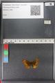http://mczbase.mcz.harvard.edu/specimen_images/ent-lepidoptera/images/2011_01_24/IMG_066704.JPG