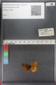http://mczbase.mcz.harvard.edu/specimen_images/ent-lepidoptera/images/2011_01_24/IMG_066706.JPG