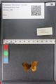http://mczbase.mcz.harvard.edu/specimen_images/ent-lepidoptera/images/2011_01_24/IMG_066707.JPG
