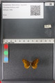 http://mczbase.mcz.harvard.edu/specimen_images/ent-lepidoptera/images/2011_01_24/IMG_066709.JPG