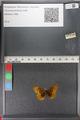 http://mczbase.mcz.harvard.edu/specimen_images/ent-lepidoptera/images/2011_01_24/IMG_066710.JPG