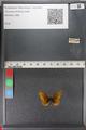 http://mczbase.mcz.harvard.edu/specimen_images/ent-lepidoptera/images/2011_01_24/IMG_066711.JPG