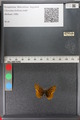 http://mczbase.mcz.harvard.edu/specimen_images/ent-lepidoptera/images/2011_01_24/IMG_066712.JPG