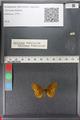http://mczbase.mcz.harvard.edu/specimen_images/ent-lepidoptera/images/2011_01_24/IMG_066728.JPG