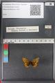 http://mczbase.mcz.harvard.edu/specimen_images/ent-lepidoptera/images/2011_01_24/IMG_066753.JPG