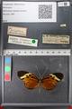 http://mczbase.mcz.harvard.edu/specimen_images/ent-lepidoptera/images/2011_02_08/IMG_069393.JPG