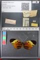 http://mczbase.mcz.harvard.edu/specimen_images/ent-lepidoptera/images/2011_02_08/IMG_069400.JPG