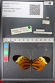 http://mczbase.mcz.harvard.edu/specimen_images/ent-lepidoptera/images/2011_02_08/IMG_069401.JPG
