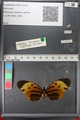 http://mczbase.mcz.harvard.edu/specimen_images/ent-lepidoptera/images/2011_02_08/IMG_069402.JPG