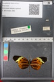 http://mczbase.mcz.harvard.edu/specimen_images/ent-lepidoptera/images/2011_02_08/IMG_069403.JPG