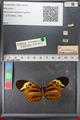 http://mczbase.mcz.harvard.edu/specimen_images/ent-lepidoptera/images/2011_02_08/IMG_069404.JPG