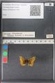 http://mczbase.mcz.harvard.edu/specimen_images/ent-lepidoptera/images/2011_02_12/IMG_070480.JPG