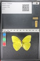 http://mczbase.mcz.harvard.edu/specimen_images/ent-lepidoptera/images/2011_02_16/IMG_071029.JPG