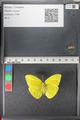http://mczbase.mcz.harvard.edu/specimen_images/ent-lepidoptera/images/2011_02_16/IMG_071030.JPG