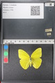 http://mczbase.mcz.harvard.edu/specimen_images/ent-lepidoptera/images/2011_02_16/IMG_071031.JPG