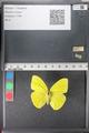 http://mczbase.mcz.harvard.edu/specimen_images/ent-lepidoptera/images/2011_02_16/IMG_071033.JPG