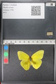 http://mczbase.mcz.harvard.edu/specimen_images/ent-lepidoptera/images/2011_02_16/IMG_071035.JPG