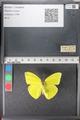 http://mczbase.mcz.harvard.edu/specimen_images/ent-lepidoptera/images/2011_02_16/IMG_071037.JPG