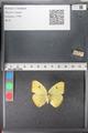 http://mczbase.mcz.harvard.edu/specimen_images/ent-lepidoptera/images/2011_02_16/IMG_071062.JPG