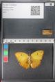 http://mczbase.mcz.harvard.edu/specimen_images/ent-lepidoptera/images/2011_02_16/IMG_071070.JPG