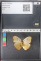 http://mczbase.mcz.harvard.edu/specimen_images/ent-lepidoptera/images/2011_02_16/IMG_071072.JPG
