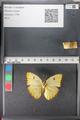 http://mczbase.mcz.harvard.edu/specimen_images/ent-lepidoptera/images/2011_02_16/IMG_071076.JPG
