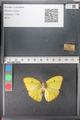http://mczbase.mcz.harvard.edu/specimen_images/ent-lepidoptera/images/2011_02_16/IMG_071077.JPG