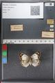 http://mczbase.mcz.harvard.edu/specimen_images/ent-lepidoptera/images/2011_02_17/IMG_071819.JPG