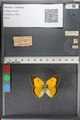 http://mczbase.mcz.harvard.edu/specimen_images/ent-lepidoptera/images/2011_02_17/IMG_071851.JPG
