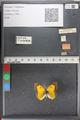 http://mczbase.mcz.harvard.edu/specimen_images/ent-lepidoptera/images/2011_02_18/IMG_071911.JPG
