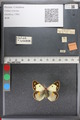 http://mczbase.mcz.harvard.edu/specimen_images/ent-lepidoptera/images/2011_02_18/IMG_071912.JPG