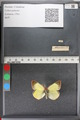 http://mczbase.mcz.harvard.edu/specimen_images/ent-lepidoptera/images/2011_02_18/IMG_071930.JPG