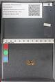 http://mczbase.mcz.harvard.edu/specimen_images/ent-lepidoptera/images/2011_02_18/IMG_071962.JPG