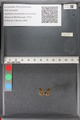 http://mczbase.mcz.harvard.edu/specimen_images/ent-lepidoptera/images/2011_02_18/IMG_071963.JPG