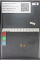 http://mczbase.mcz.harvard.edu/specimen_images/ent-lepidoptera/images/2011_02_18/IMG_071965.JPG
