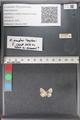 http://mczbase.mcz.harvard.edu/specimen_images/ent-lepidoptera/images/2011_02_18/IMG_072003.JPG