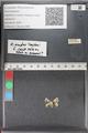 http://mczbase.mcz.harvard.edu/specimen_images/ent-lepidoptera/images/2011_02_18/IMG_072009.JPG