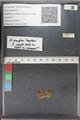 http://mczbase.mcz.harvard.edu/specimen_images/ent-lepidoptera/images/2011_02_18/IMG_072013.JPG