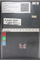 http://mczbase.mcz.harvard.edu/specimen_images/ent-lepidoptera/images/2011_02_18/IMG_072014.JPG