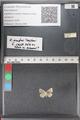 http://mczbase.mcz.harvard.edu/specimen_images/ent-lepidoptera/images/2011_02_18/IMG_072016.JPG