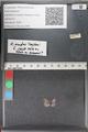 http://mczbase.mcz.harvard.edu/specimen_images/ent-lepidoptera/images/2011_02_18/IMG_072020.JPG