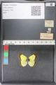http://mczbase.mcz.harvard.edu/specimen_images/ent-lepidoptera/images/2011_02_22/IMG_072031.JPG