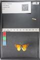 http://mczbase.mcz.harvard.edu/specimen_images/ent-lepidoptera/images/2011_02_23/IMG_072573.JPG