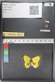 http://mczbase.mcz.harvard.edu/specimen_images/ent-lepidoptera/images/2011_02_23/IMG_072587.JPG
