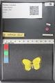 http://mczbase.mcz.harvard.edu/specimen_images/ent-lepidoptera/images/2011_02_23/IMG_072593.JPG