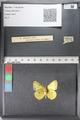 http://mczbase.mcz.harvard.edu/specimen_images/ent-lepidoptera/images/2011_02_24/IMG_072714.JPG