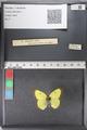 http://mczbase.mcz.harvard.edu/specimen_images/ent-lepidoptera/images/2011_02_24/IMG_072717.JPG