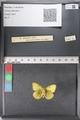 http://mczbase.mcz.harvard.edu/specimen_images/ent-lepidoptera/images/2011_02_24/IMG_072723.JPG