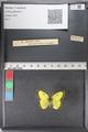 http://mczbase.mcz.harvard.edu/specimen_images/ent-lepidoptera/images/2011_02_24/IMG_072725.JPG